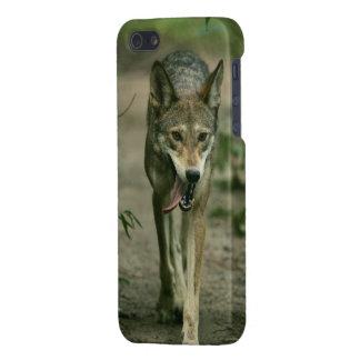 Cubierta del iPhone 5 del lobo rojo - cubierta del iPhone 5 Funda