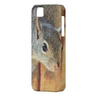 Cubierta del iPhone de la ardilla iPhone 5 Case-Mate Cobertura