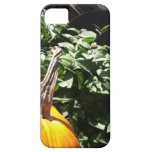 Cubierta del iPhone de la sol de la calabaza iPhone 5 Case-Mate Cobertura