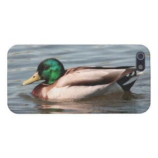 Cubierta del iPhone del pato silvestre - comprensi iPhone 5 Carcasa