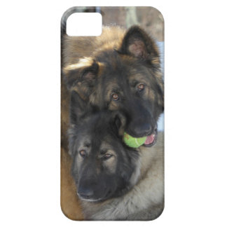 Cubierta del iPhone del perro casero Funda Para iPhone 5 Barely There