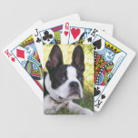 Cubierta del perrito de Boston Terrier de tarjetas Baraja