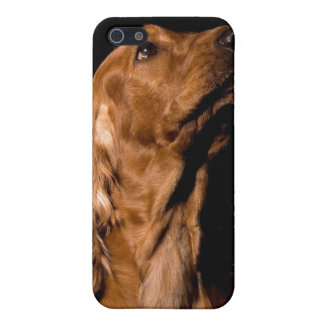 Cubierta del perro iPhone4 de Brown cocker spaniel iPhone 5 Carcasa
