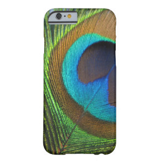 Cubierta del teléfono de la pluma del pavo real funda para iPhone 6 barely there