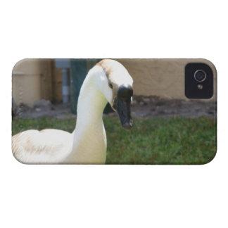 Cubierta del teléfono del ganso carcasa para iPhone 4 de Case-Mate