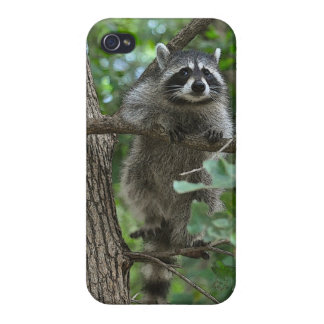 Cubierta del teléfono del mapache que sube iPhone 4 funda