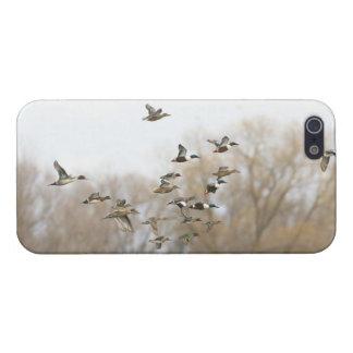 Cubierta mezclada del iPhone 5 de los patos - comp iPhone 5 Funda