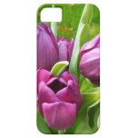 Cubierta púrpura bonita #2 del iPhone 5 de los tul iPhone 5 Case-Mate Cárcasas