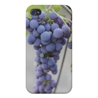 Cubierta salvaje del iPhone de las uvas iPhone 4/4S Fundas