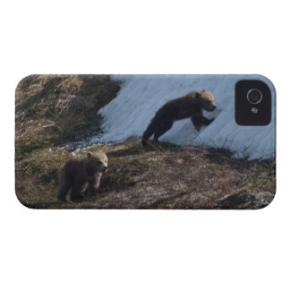 Cubs at Play Case-Mate iPhone 4 Case
