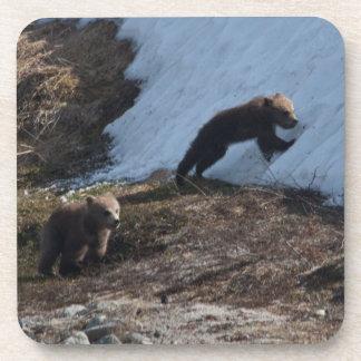 Cubs at Play Coaster