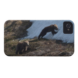 Cubs at Play iPhone 4 Case