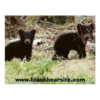 cubs, www.blackbearsite.com postcard