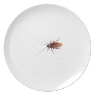 Cucaracha en la placa platos