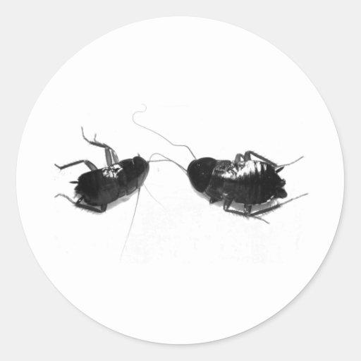 Cucaracha muerta pegatina redonda