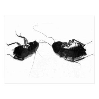 Cucaracha muerta tarjetas postales