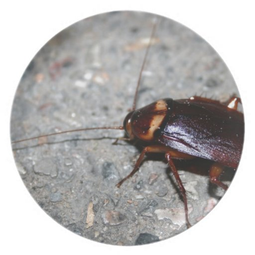 ¡Cucaracha! Plato Para Fiesta