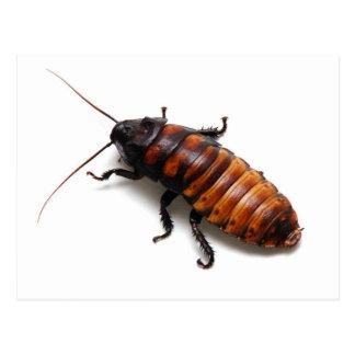 Cucaracha Tarjeta Postal