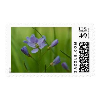 Cuckoo Flower Stamp
