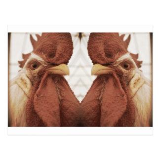 cuckoo for two crazy bird postcard