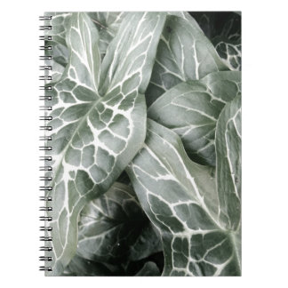 Cuckoo Pint Leaves In Black And White Spiral Note Books