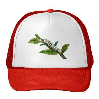 Cucullia verbasci caterpillar trucker hat