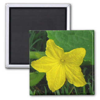 Cucumber Bloom 2 Inch Square Magnet