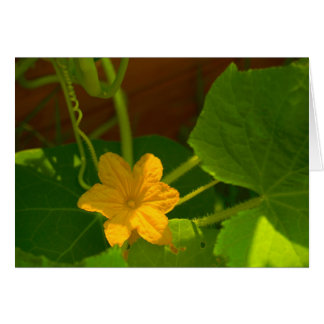 Cucumber Bloom Greeting Cards