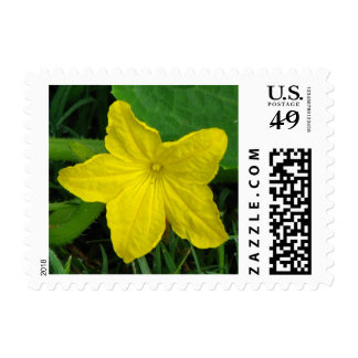 Cucumber Bloom Stamps