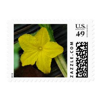 Cucumber Bloom Stamp