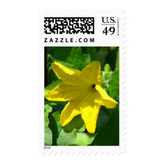 Cucumber Bloom Postage Stamps