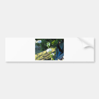 Cucumber flower in a greenhouse bumper sticker