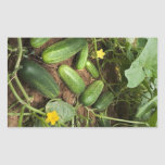 Cucumber Patch Rectangle Stickers
