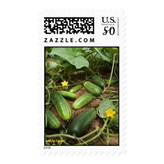 Cucumber Patch U.S. Postage Stamps