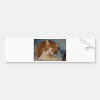 Cuddle Buttons Bumper Sticker