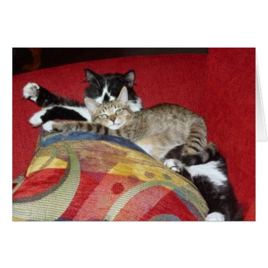 Cuddle Cats Card