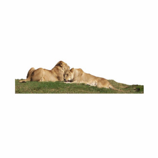 Cuddling Lions Sculpted Magnet Acrylic Cut Outs