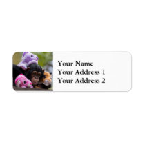 Cuddly Chimp & Animal Friends Label