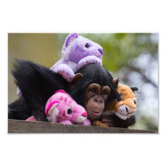 Cuddly Chimp & Friends Photo Print