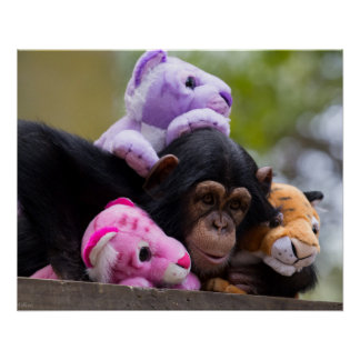 Cuddly Chimp & Friends Poster
