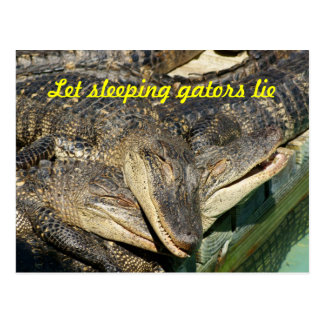 Cuddly Gators Postcard