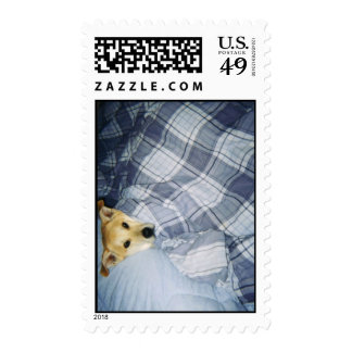 Cuddly Golden Lab mix Postage Stamps