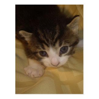 Cuddly Kitten Post Cards