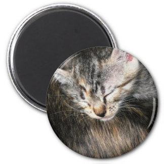 Cuddly Kitten Refrigerator Magnets