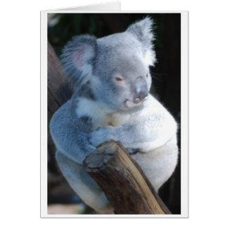 Cuddly Koala Card