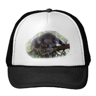 Cuddly Koala Trucker Hat