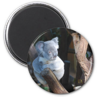 Cuddly Koala Magnets