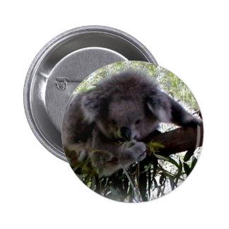 Cuddly Koala Pinback Button