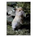 Cuddly Lionhead Bunny Greeting Card