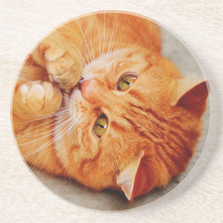 Cuddly Little Cat - Cute Kitty Print Coaster